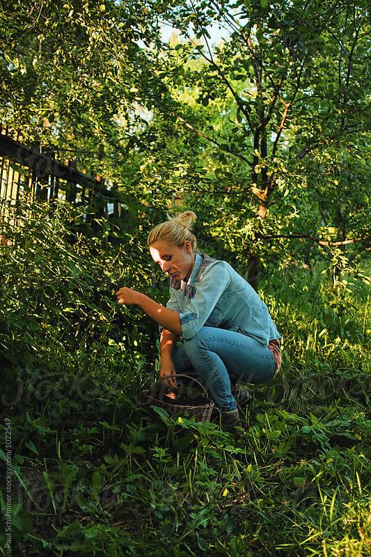 garden herbs by Paul Schlemmer for Stocksy United
