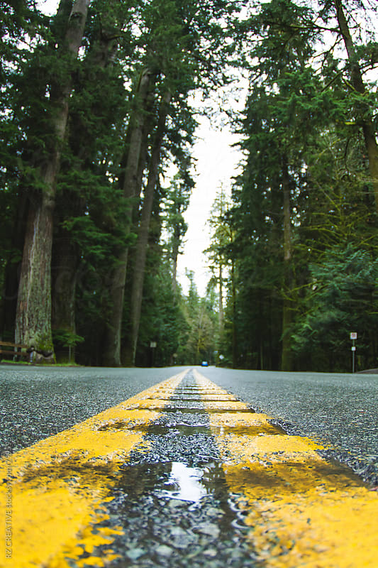 Low angle picture of a road in the northern part of Vancouver Island. by RZ CREATIVE for Stocksy United
