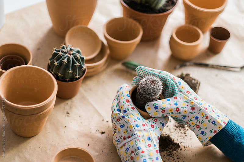 Transplanting a Small Cactus by Aleksandra Jankovic for Stocksy United