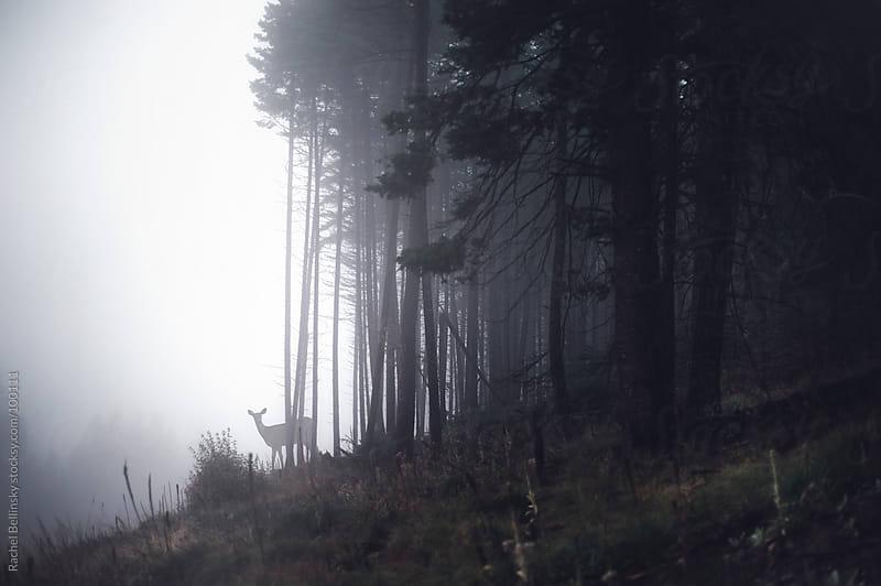 Distant deer in a misty forest by Rachel Bellinsky for Stocksy United