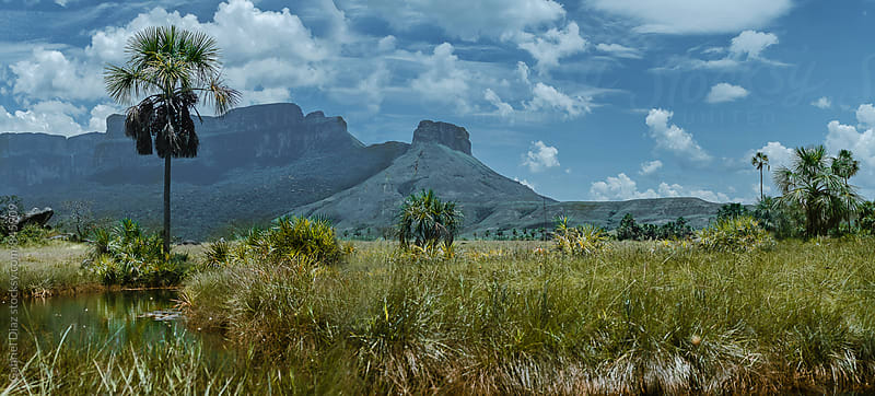 View from way to Acopan Tepuy - Venezuela, South America by Gabriel Diaz for Stocksy United
