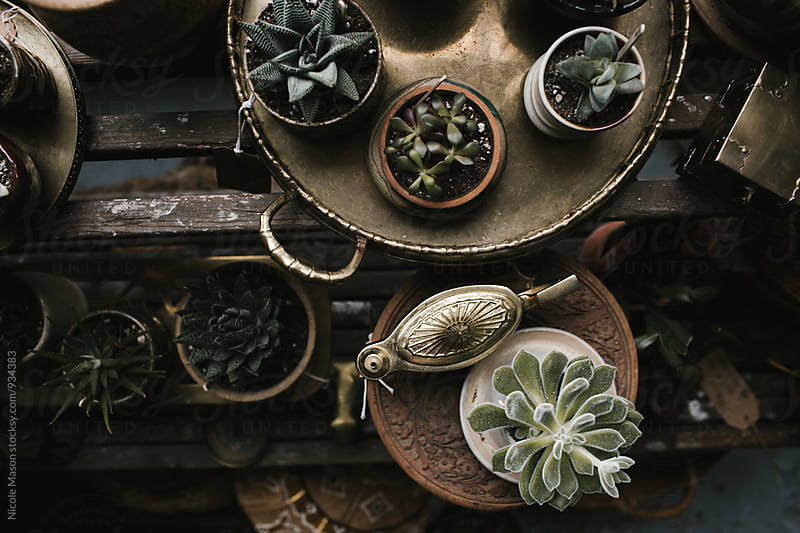 interior of vintage shop with furniture and plants by Nicole Mason for Stocksy United