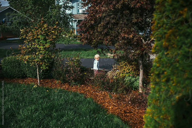 A toddler boy walks through his front yard at the start of fall by Amanda Voelker for Stocksy United