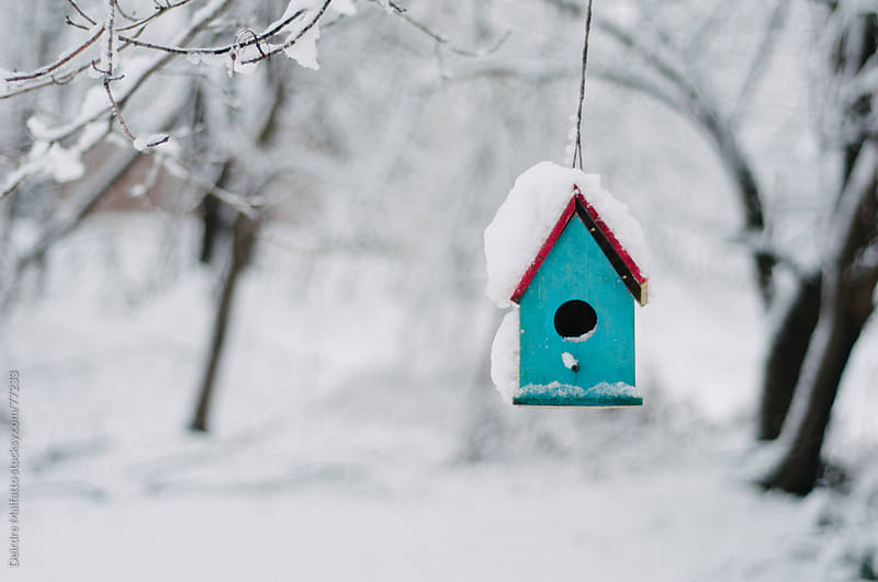 blue hanging birdhouse in snow by Deirdre Malfatto for Stocksy United