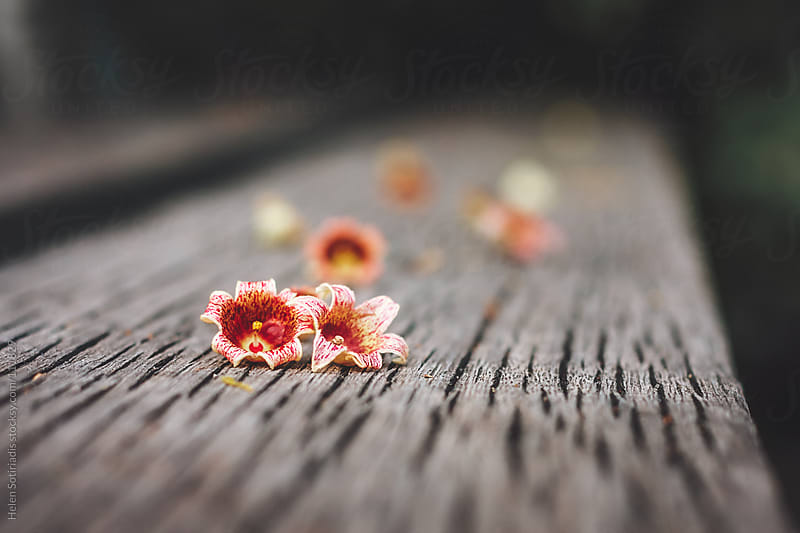 Blossoms on a Bench by Helen Sotiriadis for Stocksy United
