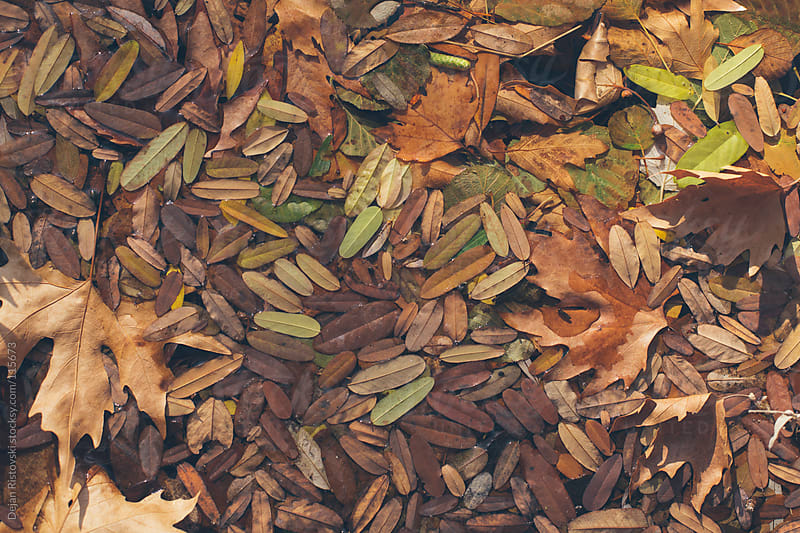 Bunch of fallen leafs by Dejan Ristovski for Stocksy United