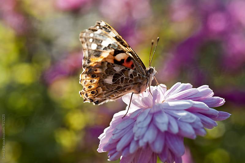 The butterfly by Svetlana Shchemeleva for Stocksy United