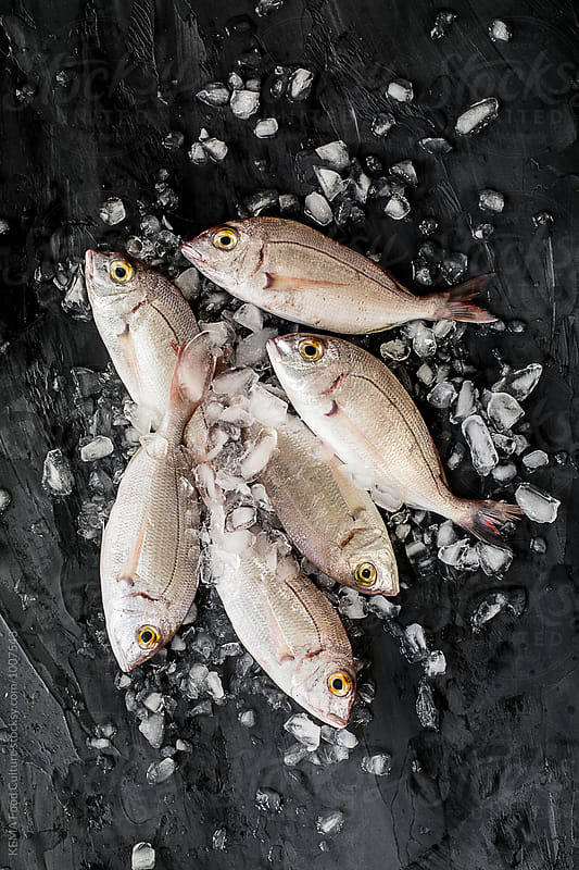 Sea bream with ice on a cement background by KEMA Food Culture for Stocksy United