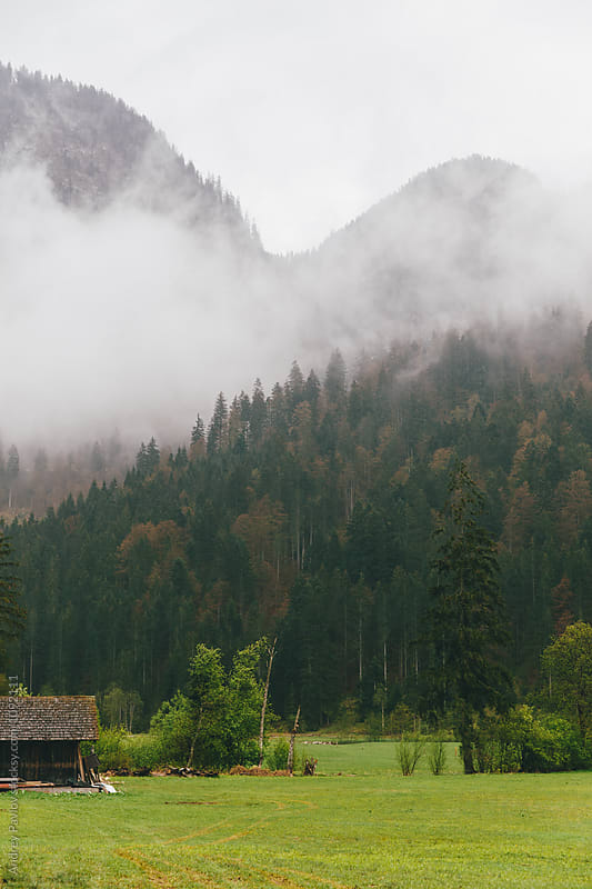 Foggy forest on hilly landscape by Andrey Pavlov for Stocksy United