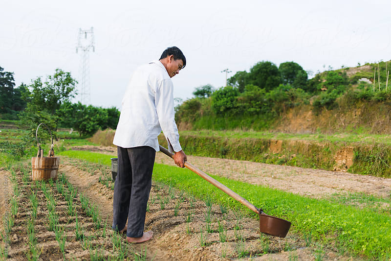 farmer working in the field by zheng long for Stocksy United