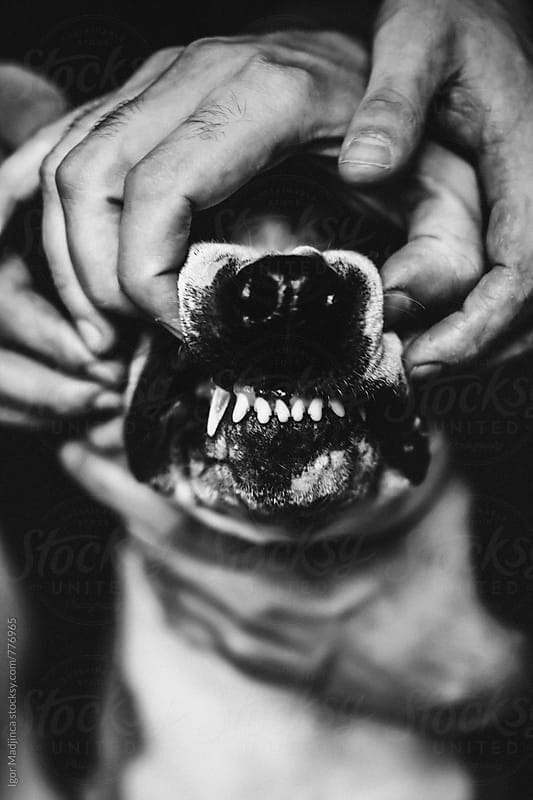 dangerous dog Jaw ,black and white by Igor Madjinca for Stocksy United