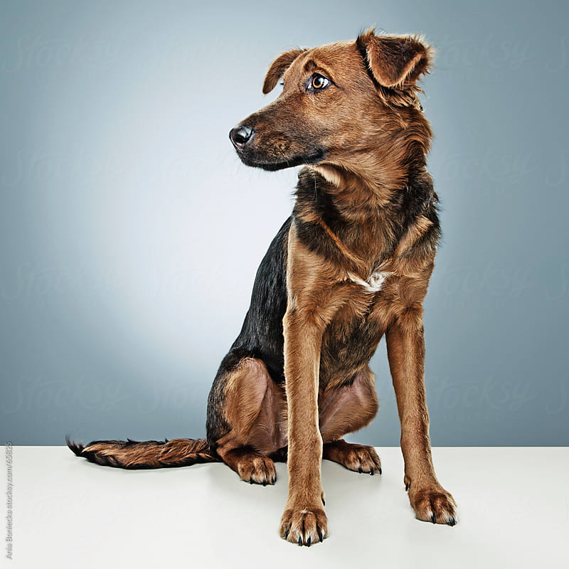 Dog portrait by Ania Boniecka for Stocksy United