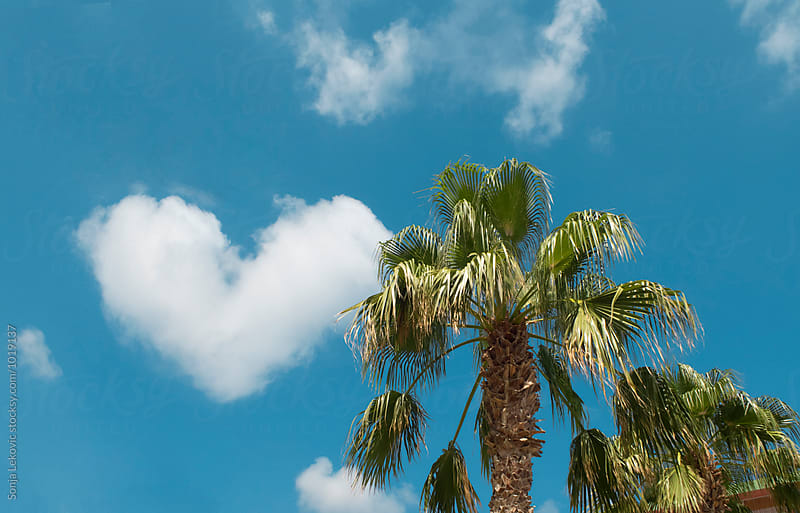 heart shaped cloud in the sky and palm trees by Sonja Lekovic for Stocksy United