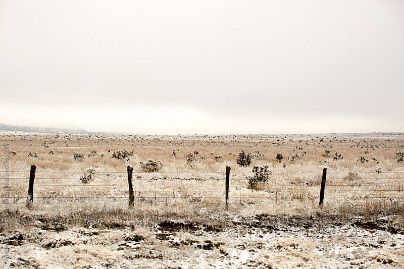Frost covered field  by Ann-Sophie Fjelloe-Jensen for Stocksy United