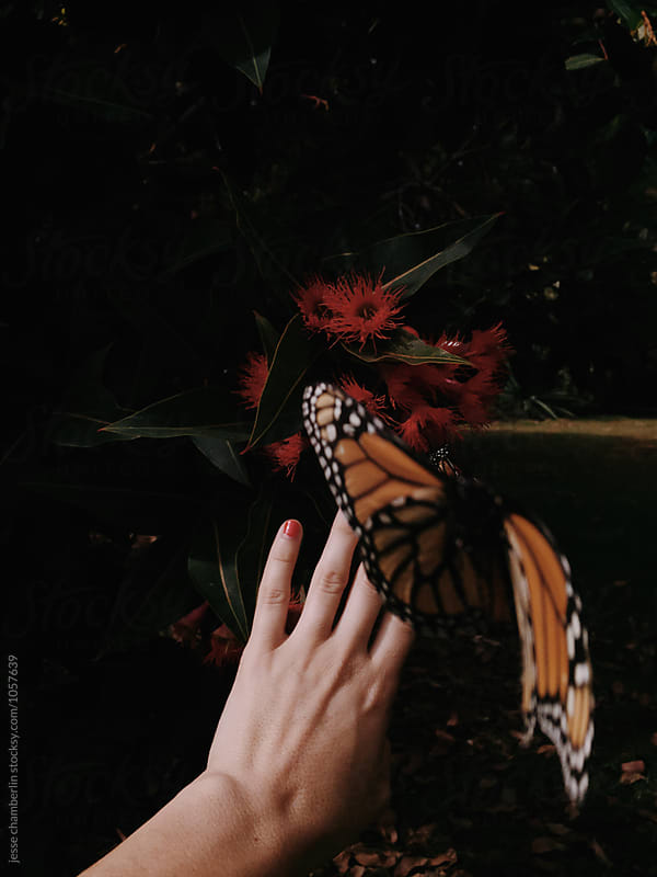 Butterfly by jesse chamberlin for Stocksy United