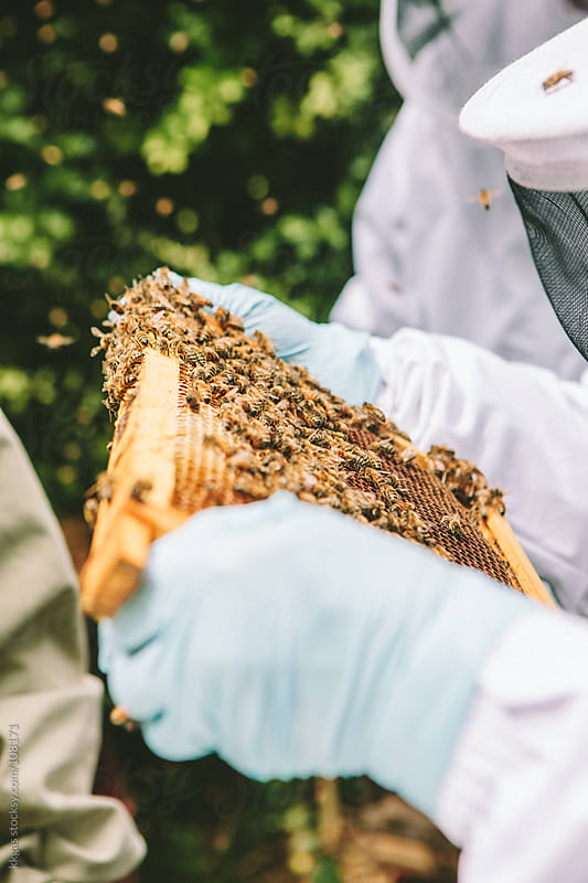 Beekeeper Inspecting Bee Hive by kkgas for Stocksy United