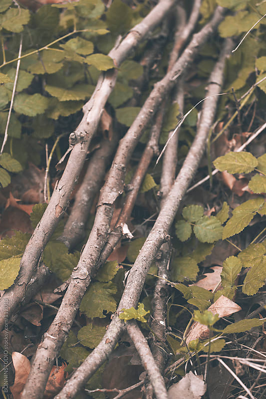 Wood poplar branches on the forest. by BONNINSTUDIO for Stocksy United