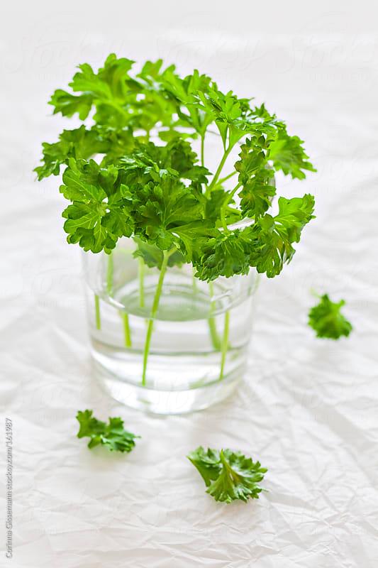 Fresh parsley  by Corinna Gissemann for Stocksy United