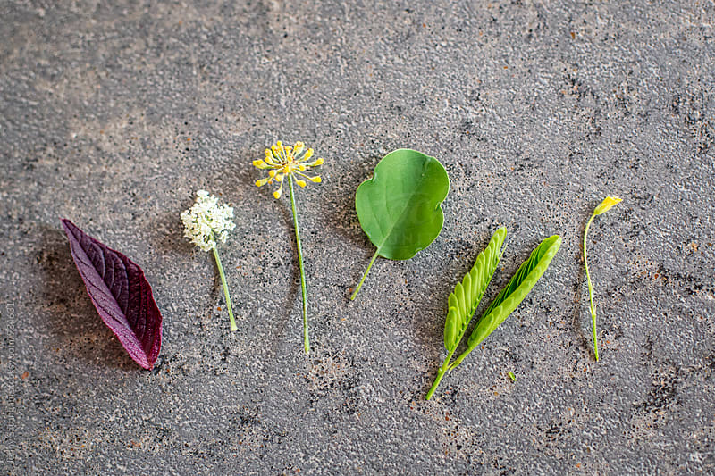 Spring Plants from the Farm Garden 1 by Jenny Sathngam for Stocksy United