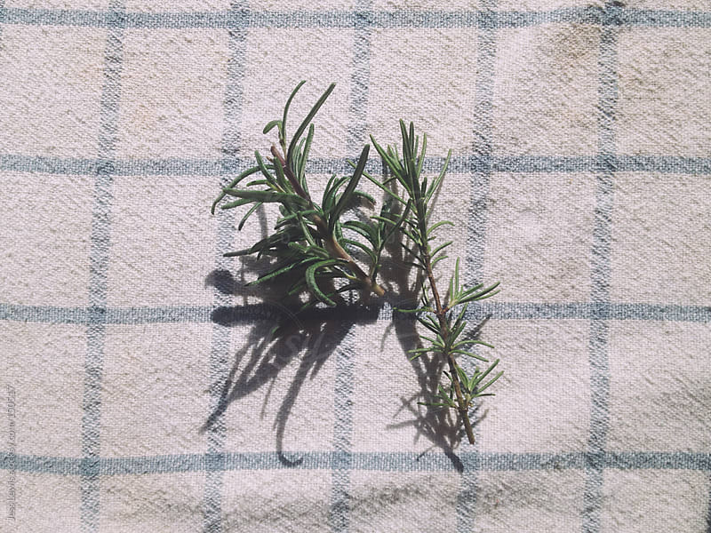 rosemary stems on cloth by Jess Lewis for Stocksy United
