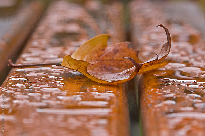 Brown leaf has fallen on a wet outdoor table by Melanie Kintz for Stocksy United