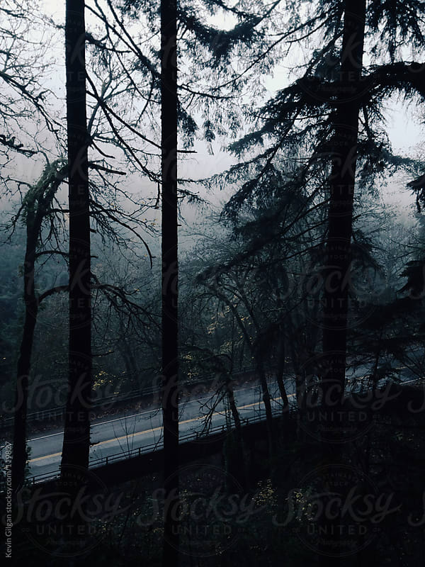 Foggy Road Behind Trees by Kevin Gilgan for Stocksy United