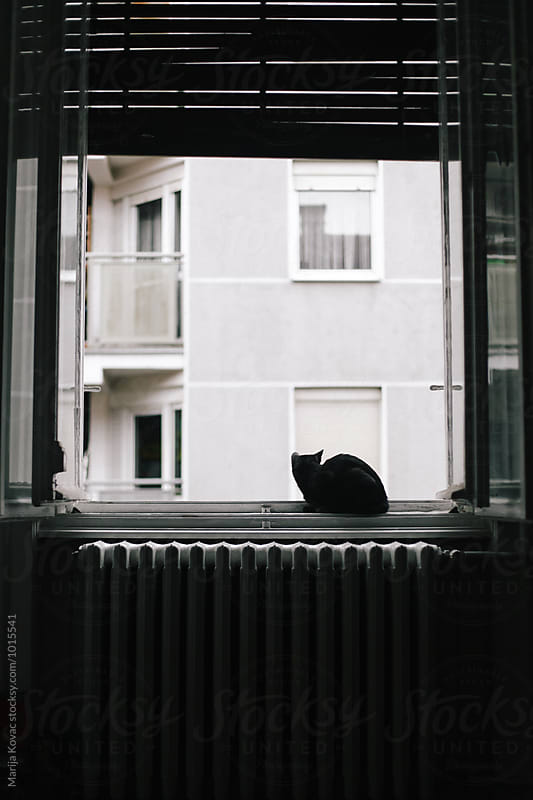 Black cat sitting on the window, vertical by Marija Kovac for Stocksy United