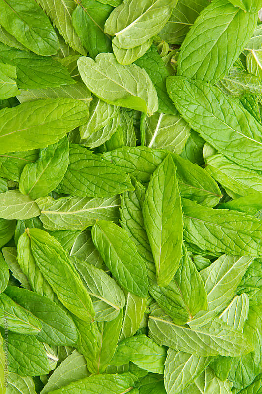 Spearmint leaves by Kirsty Begg for Stocksy United