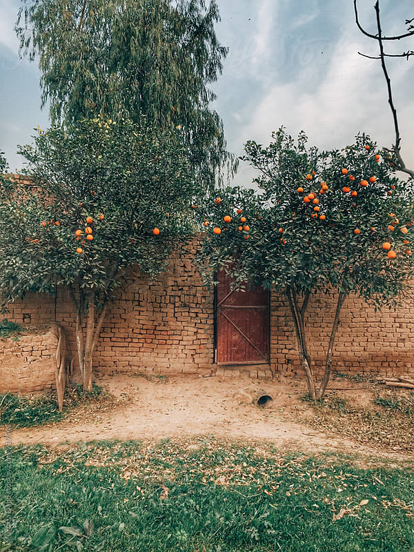 A doorway surrounded by orange trees by Murtaza Daud for Stocksy United