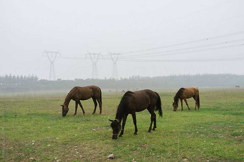 Horse eating grass in the suburb of Beijing,China by Maa Hoo for Stocksy United