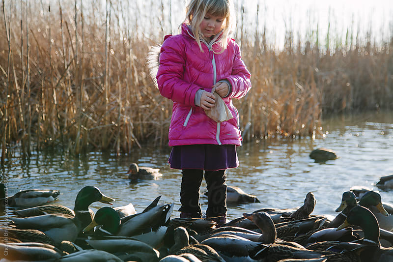 Little girls feeds the ducks. by Cherish Bryck for Stocksy United