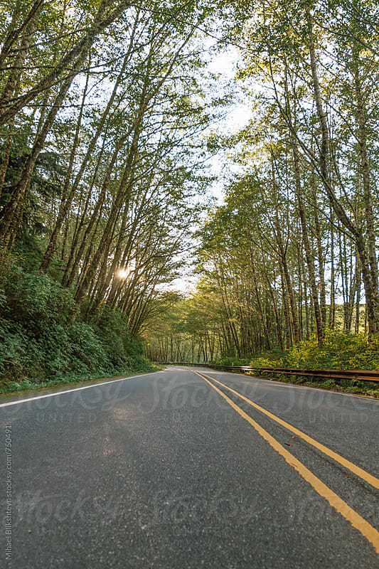 Low-angle view of a forested highway road with setting sun in the summer by Mihael Blikshteyn for Stocksy United