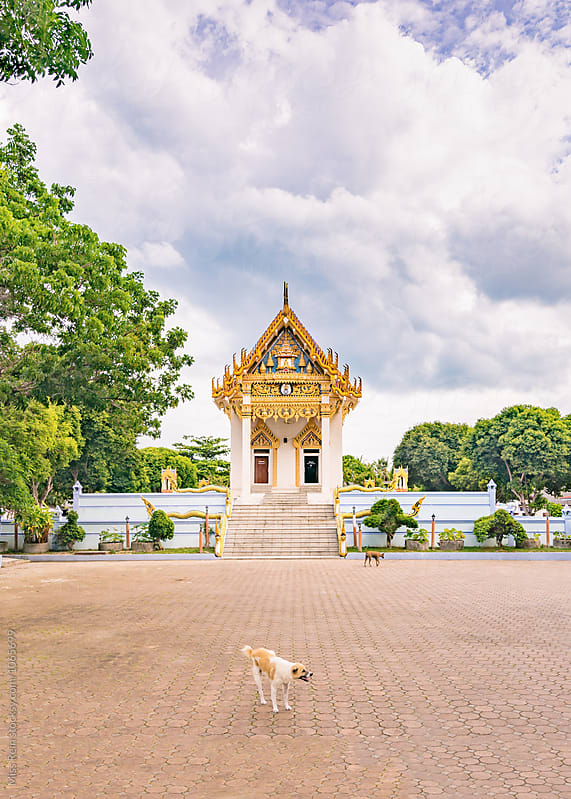 Living Buddha Temple with a dog,Samui,Thailang by Miss Rein for Stocksy United