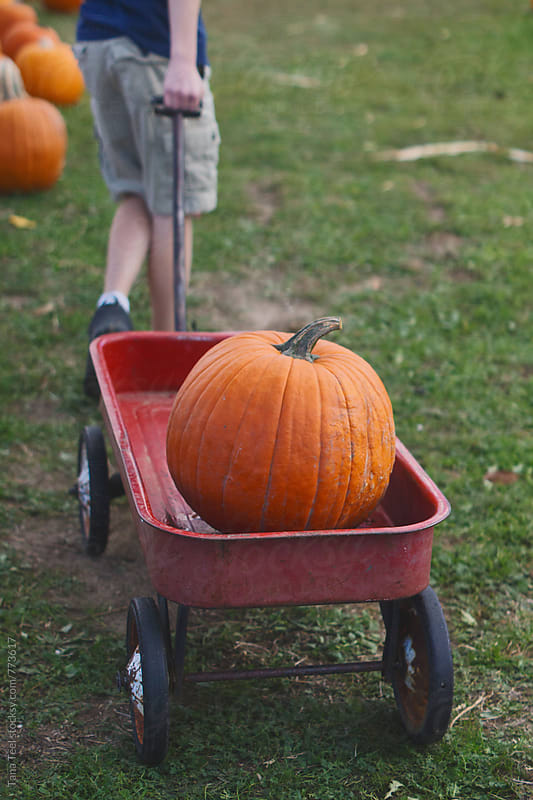 young boy pulls wagon with pumpkin in it by Tana Teel for Stocksy United