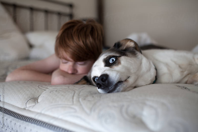 red haired boy with eyes closed lying beside blue eyed dog on bed by Lisa MacIntosh for Stocksy United