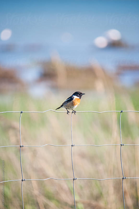 Small bird perched on a fence by ACALU Studio for Stocksy United