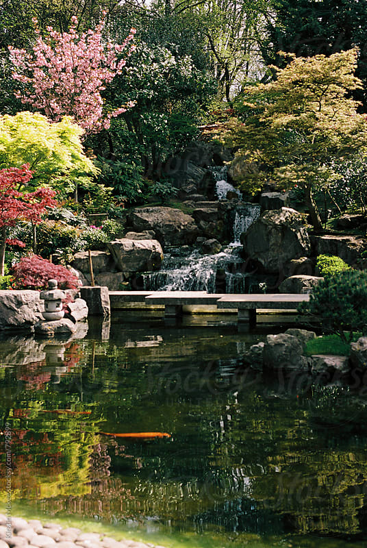 Kyoto Garden, Holland Park, London by Kirstin Mckee for Stocksy United