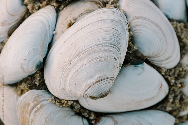 Neatly stacked seashells on the beach by Cameron Whitman for Stocksy United