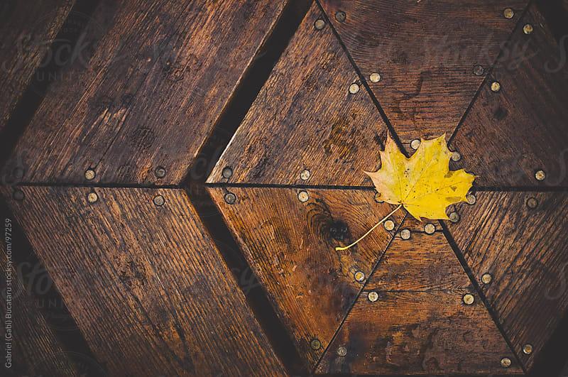 yellow leaf on table by Gabriel (Gabi) Bucataru for Stocksy United