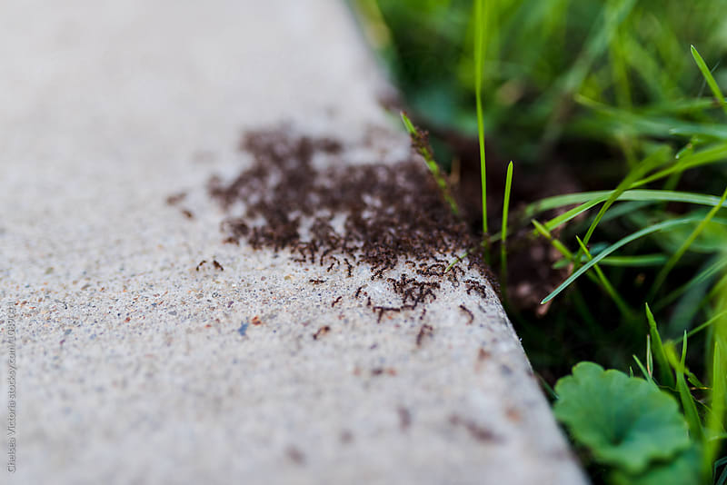 Ants on the sidewalk by Chelsea Victoria for Stocksy United