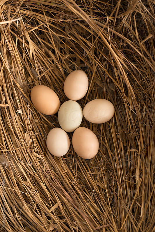 Close up of eggs in nest by Maa Hoo for Stocksy United