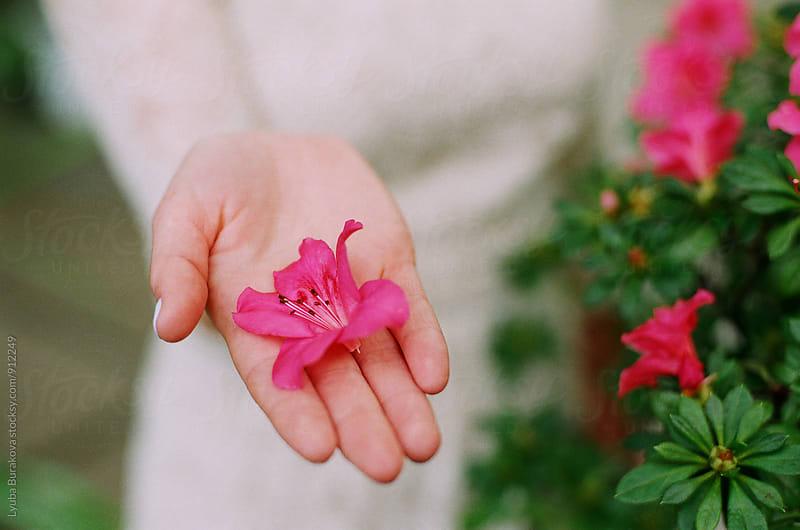 Azalea flower on a hand by Liubov Burakova for Stocksy United