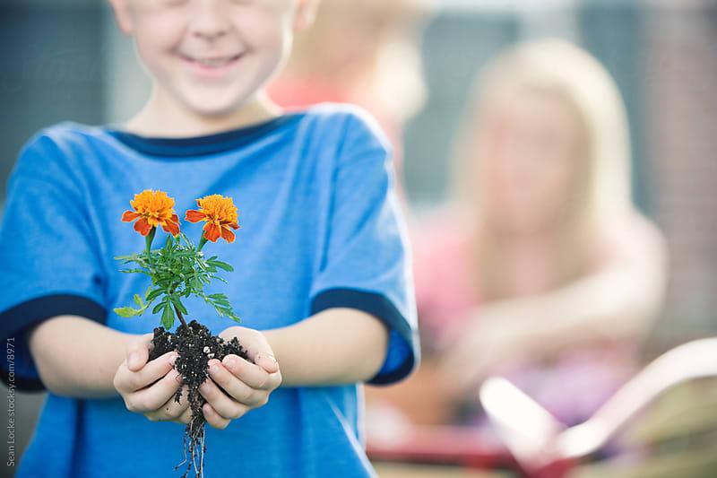 Planting: Little Boy Holds Marigold Annual by Sean Locke for Stocksy United