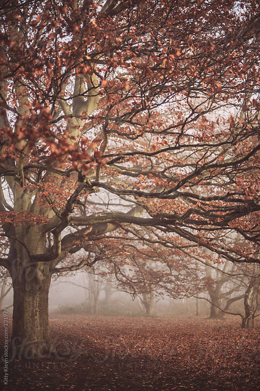 Tree in the fog by Kitty Kleyn for Stocksy United