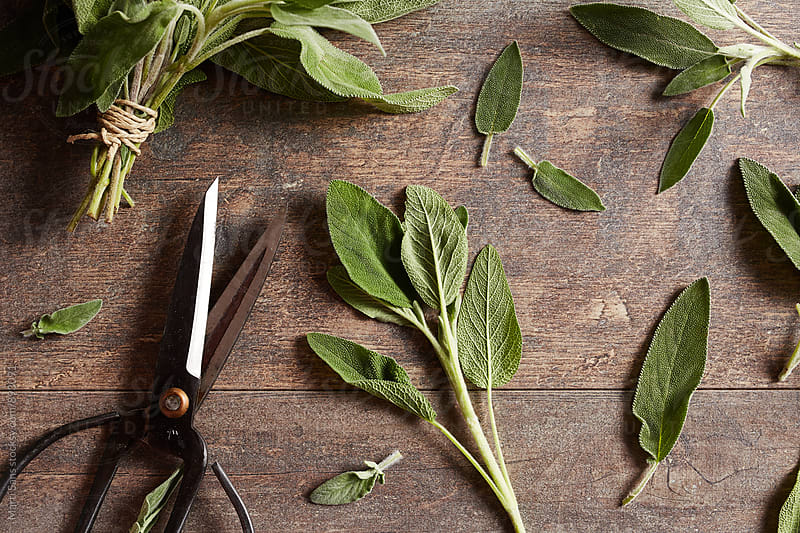 Leaves of fresh sage on wooden table by Martí Sans for Stocksy United