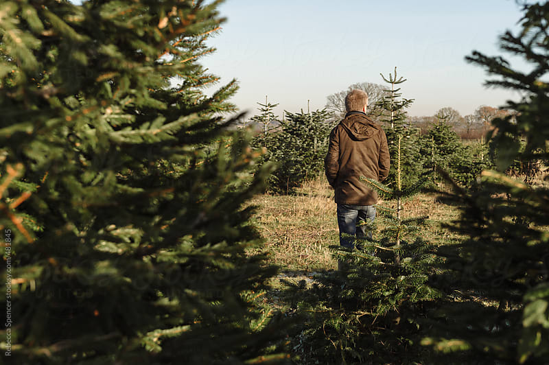 Man looks for his perfect Christmas tree by Rebecca Spencer for Stocksy United
