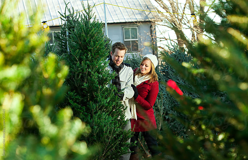 Tree Lot: Couple Discuss Tree Choice by Sean Locke for Stocksy United