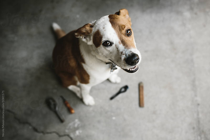 dog sitting on cement floor with artist tools by Nicole Mason for Stocksy United