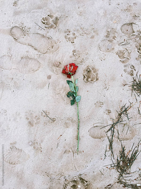 Footworn flower on sand by Guille Faingold for Stocksy United
