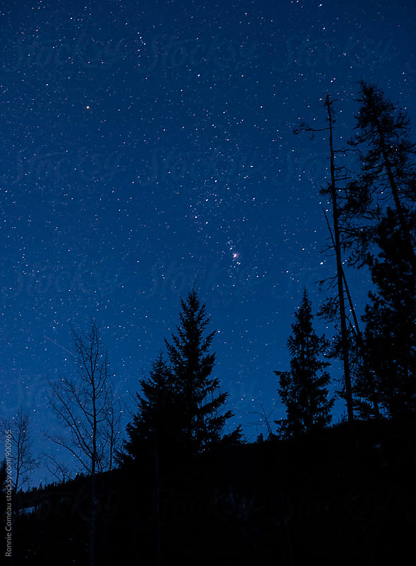 Night Sky Including Orion by Ronnie Comeau for Stocksy United